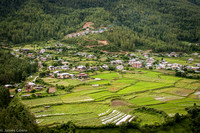 A view of the rice fields as we headed up the mountain to start our hike.