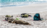 This is what happens when you leave your stuff on the beach. The locals move in!